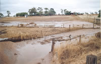 Moora Flood 5